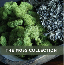 The moss collection